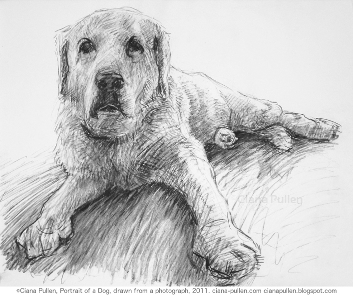 Portrait of a Dog, Drawing from 2011 by Ciana Pullen; Dimensions: 16 inches × 20 inches × 0 inch; Materials: Charcoal on Paper; Description: Drawn from a photograph. © Ciana Pullen 2011